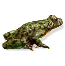 Fire-Bellied Toad - Caresheet