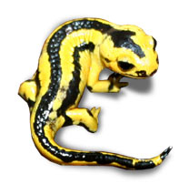 Fire Salamander Care Sheet