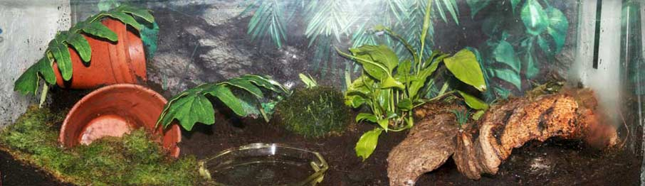 Toad Set up. Housing your toads and amphibians.