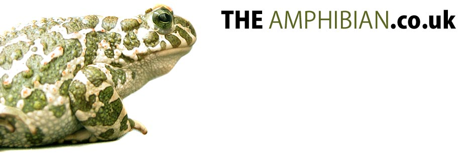 The Amphibian.co.uk - Amphibian Facts, Caresheets, Forums, Photos, Downloads and more, Frogs, Newts, Salamanders, Caecilians